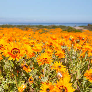 hertz flower season