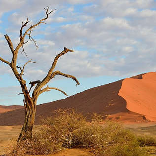namibia car rental
